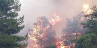 Σάμος: Ολονύχτια μάχη με τις φλόγες - Εκκενώθηκαν Ξενοδοχεία