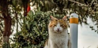 Ποιοι δήμοι χρηματοδοτούνται για καταφύγια αδέσποτων ζώων συντροφιάς το 2020 και τα ποσά χρηματοδότησης που προβλέπει η ΚΥΑ