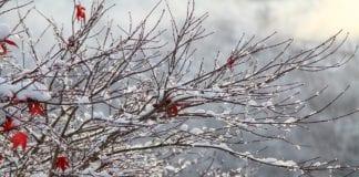 Καιρός αύριο Σάββατο 2/1: Έρχονται βροχές καταιγίδες κα χιόνια - Πρόγνωση απότο meteo του Εθνικού Αστεροσκοπείου Αθηνών