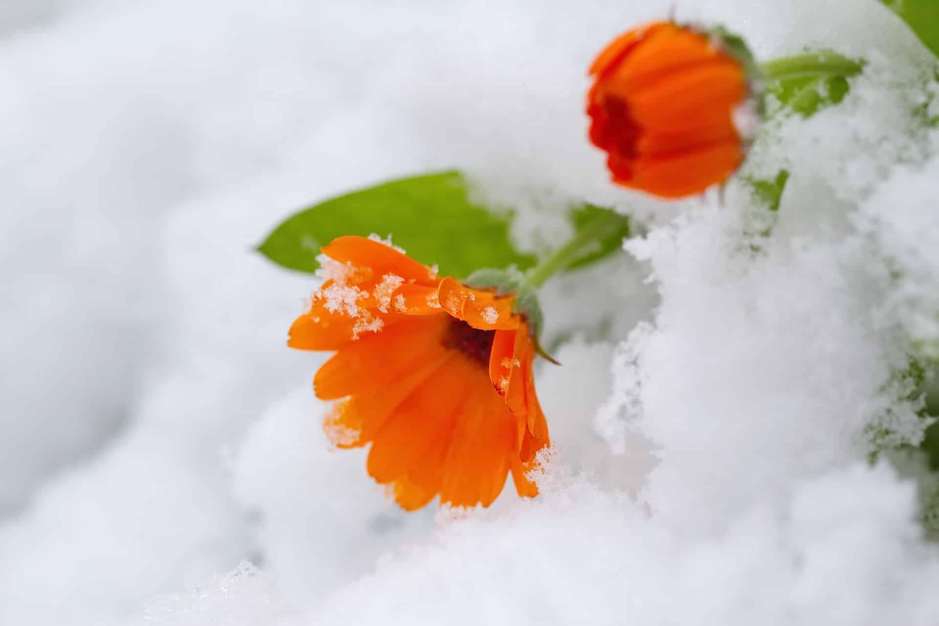 Τι γιορτή είναι σήμερα Τρίτη 19 Ιανουαρίου Ποιοι γιορτάζουν 19/1 Εορτολόγιο - Ο Καιρός από την ΕΜΥ - Η πρόγνωση για Αθήνα Θεσσαλονίκη