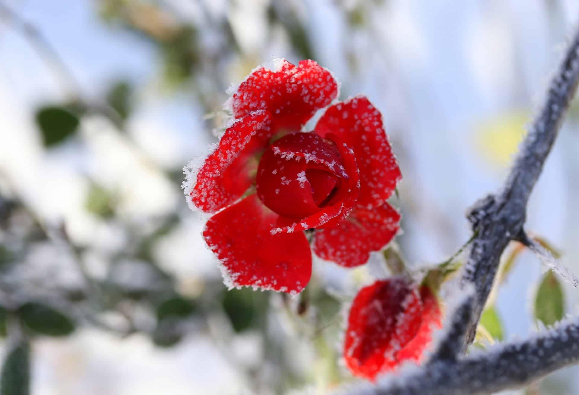 Τι γιορτή είναι σήμερα Πέμπτη 14 Ιανουαρίου Ποιοι γιορτάζουν 14/1 Εορτολόγιο - Ο Καιρός σε Αθήνα, Θεσσαλονίκη, υπόλοιπή Ελλάδα