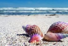 Δωρεάν κολύμπι σε πριβέ παραλίες στην Αττική - Λόγω καύσωνα ανοίγουν 3 μέρες για το κοινό η Ακτή και ο Αστέρας Βουλιαγμένης και η Α' Βούλας